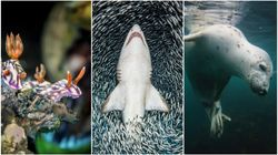 サメもクジラも自由自在、海の生きものたちの躍動感がすごい。水中写真は語る。