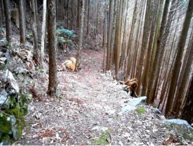 川上村から五社峠を越えて隣町へ抜ける山道は、今も残る土倉道の一部だ