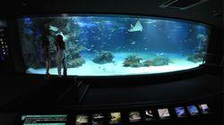 サンシャイン水族館、目玉の大型水槽で94%の魚が死ぬ