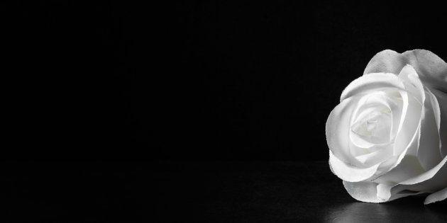 暗闇に白いバラのイメージ写真