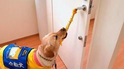 障害者の社会参加と自立のために......介助犬・聴導犬・盲導犬について知ってもらいたいこと。