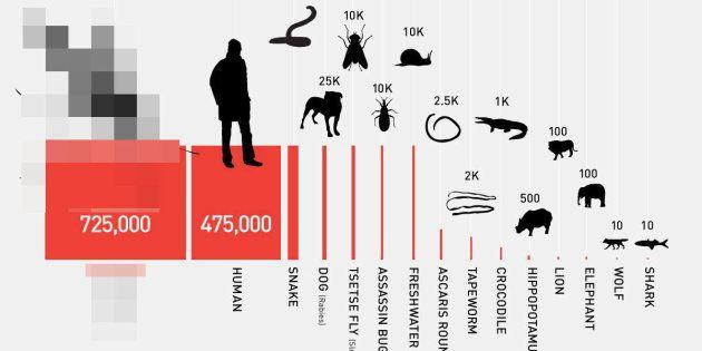 どの動物が人間を一番殺しているのか...?