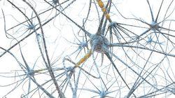 インターロイキンは感覚応答を調節し得る