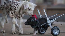 2014年、最も勇気と感動(と笑い)を与えてくれた動物たち