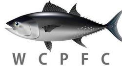 WCPFC北小委員会始まる 問われる太平洋クロマグロの資源回復計画の行方