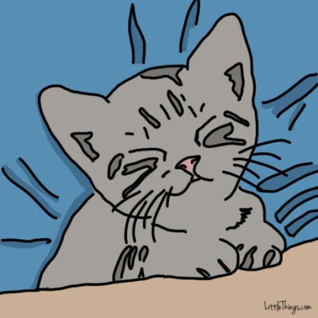 猫は、こうやって人間に「アイラブユー」を伝える