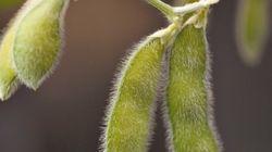 遺伝子組換え作物の危険性を指摘する論文に不正疑惑
