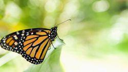 「ファーブル昆虫記」から120年、昆虫が匂いを感知し行動するまでの脳神経回路を解明