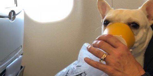 """酸素が足りない。愛犬の命を救ったCAの""""神対応""""がすごい"""