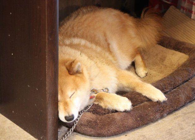 人口11人の集落で、大手サラリーマンが古民家宿を始めた理由。柴犬と見つけた第二の人生