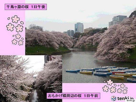 お花見、4月3日より2日がおすすめ