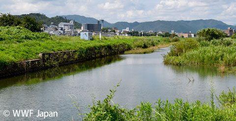 絶滅から救えるか?日本固有種アユモドキをめぐる3つの問題
