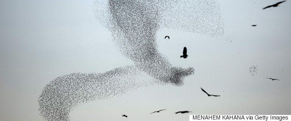 鳥がヒューストンの空を覆い尽くす......そう、あの映画のようだ(動画)