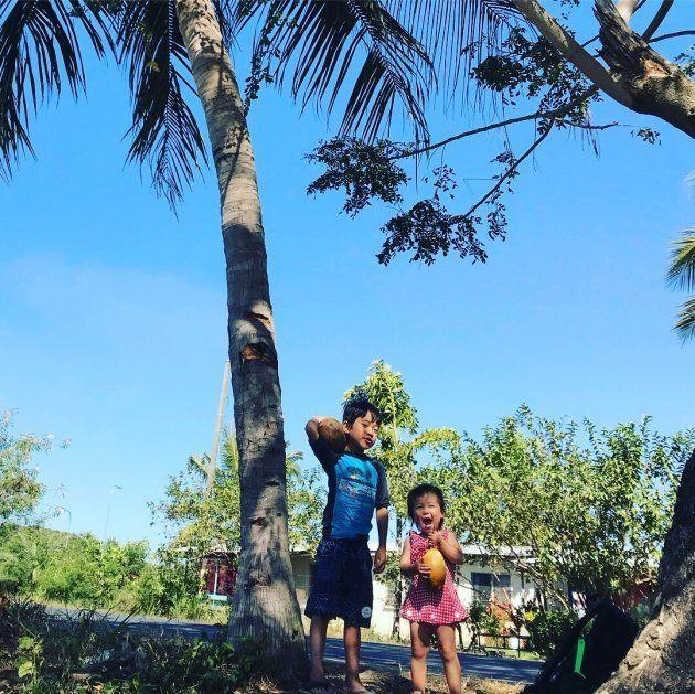 ヤシの木に登ってココナッツをゲット