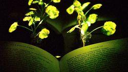 ホタルの体内にある酵素を使って植物を光らせることに成功