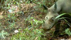 20年ぶりに見つかったスマトラサイ 密猟から守るために届けられた日本からの支援とは