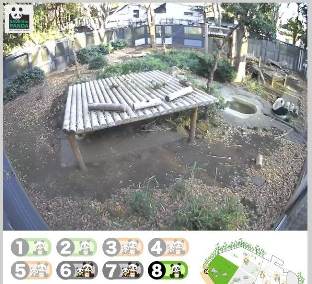 上野動物園のライブ配信、シャンシャンはどこ?【難問クイズ】