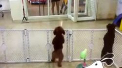 飼い主にやっと会えた子犬は踊りだす(動画)