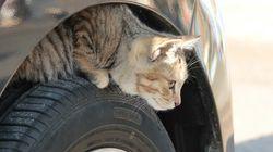 """「猫バンバン」で救える命がある。寒い冬、車に乗るときの""""思いやり"""""""