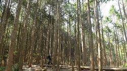 「森林環境税」新設へ、放置森林は生き返るのか/今どき目的税を新設? 既存税とのダブリ批判も