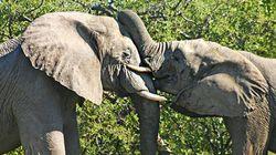 世界の野生生物犯罪の撲滅を!国連が歴史的な決議