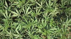 限界集落で「大麻コミュニティー」? 移住の22人を所持容疑で逮捕