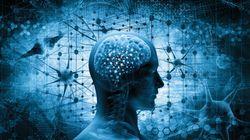 神経系の収斂進化
