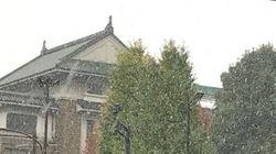 東京都心 54年ぶりに11月の初雪