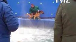 犬と人の絆を描いた映画の撮影中に動物虐待か 抵抗する犬を無理やり水の中に...