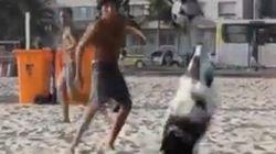 ブラジルに「ネイマール犬」が登場 きっとあなたよりサッカーが上手い
