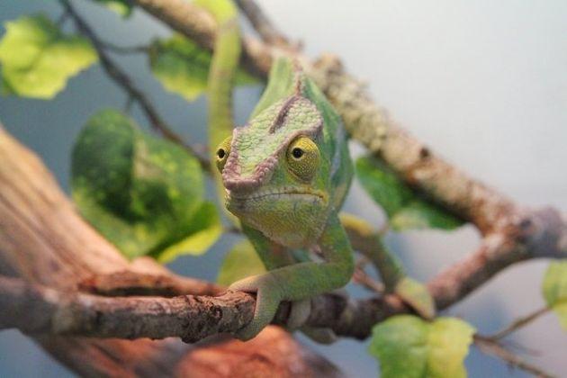 サンシャイン水族館の「ざんねんないきもの」展に出ている動物たちの姿が愛おしい