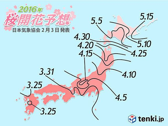 桜の開花予想、第1回が発表 今年の開花はいつごろ?