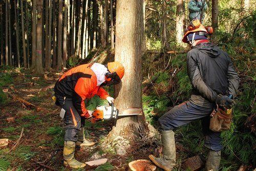 林業スクール 深刻な人手不足を背景に相次ぐ開校