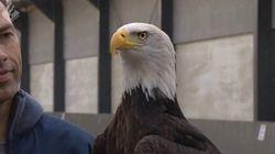 なるか、不審ドローン対策の切り札 オランダ警察が鷲にドローン捕獲を訓練中(動画)