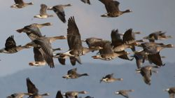 統治が湿地の生物多様性に及ぼす影響
