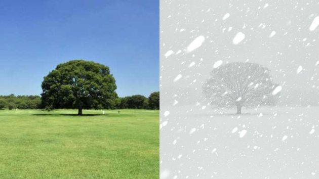 雪ヤバすぎて、昭和記念公園がスキー場みたいになっちゃった。