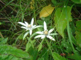 私の「国立公園満喫プロジェクト」/「花の浮島」礼文島への旅