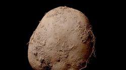 1億3000万円の値段がついた「ジャガイモの写真」が、これだ