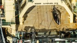 シーシェパード、日本の捕鯨写真を公開 水産庁の反論は?【UPDATE】