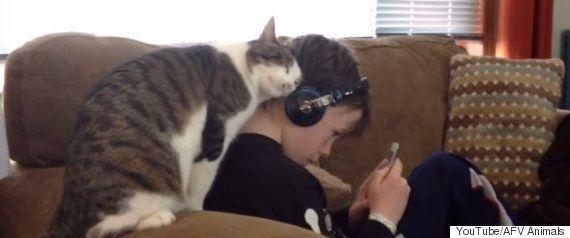 スヤスヤ眠る猫の上で、ダルマがゆ〜らゆら揺れている(動画)