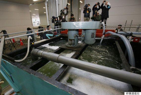 【豊洲市場】地下水から環境基準の最大79倍のベンゼン検出 移転判断に影響か