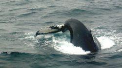 摂餌場に集まる海の捕食者たち