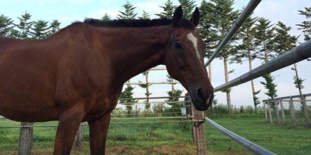 メジロライアン死す 1991年「宝塚記念」を制した名馬