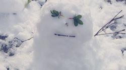大雪に喜ぶ九州・沖縄の人々 雪だるまの作り方が分からず、ググる人も