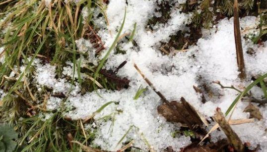 奄美大島で115年ぶりに雪【画像】