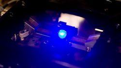 常識を覆す発見、東北大が青色LEDの殺虫効果を初めて確かめる