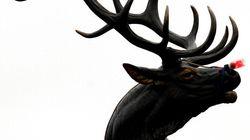 殺された鹿がハンターに逆襲。ツノに突き刺される(画像)