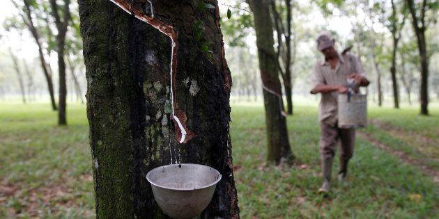 ブリヂストン社が持続可能な天然ゴムの調達方針を策定