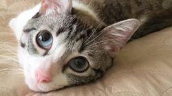 生まれつき前足はないけれけど... 元気いっぱいの猫のルーに癒される