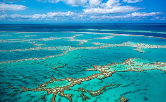 世界の珊瑚礁、99%が今世紀中に消失するとの研究結果。水温上昇を止めるカギは...?